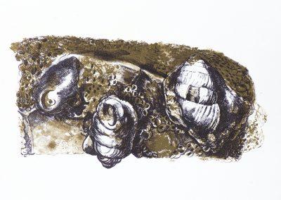 Fossile schelpen 2020 litho 29x255cm
