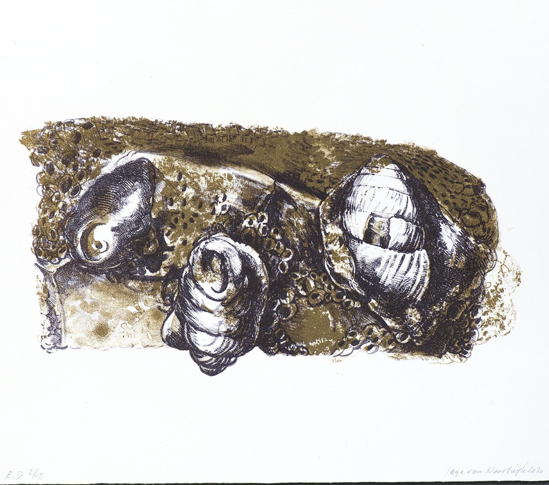 Fossile schelpen 2020 litho