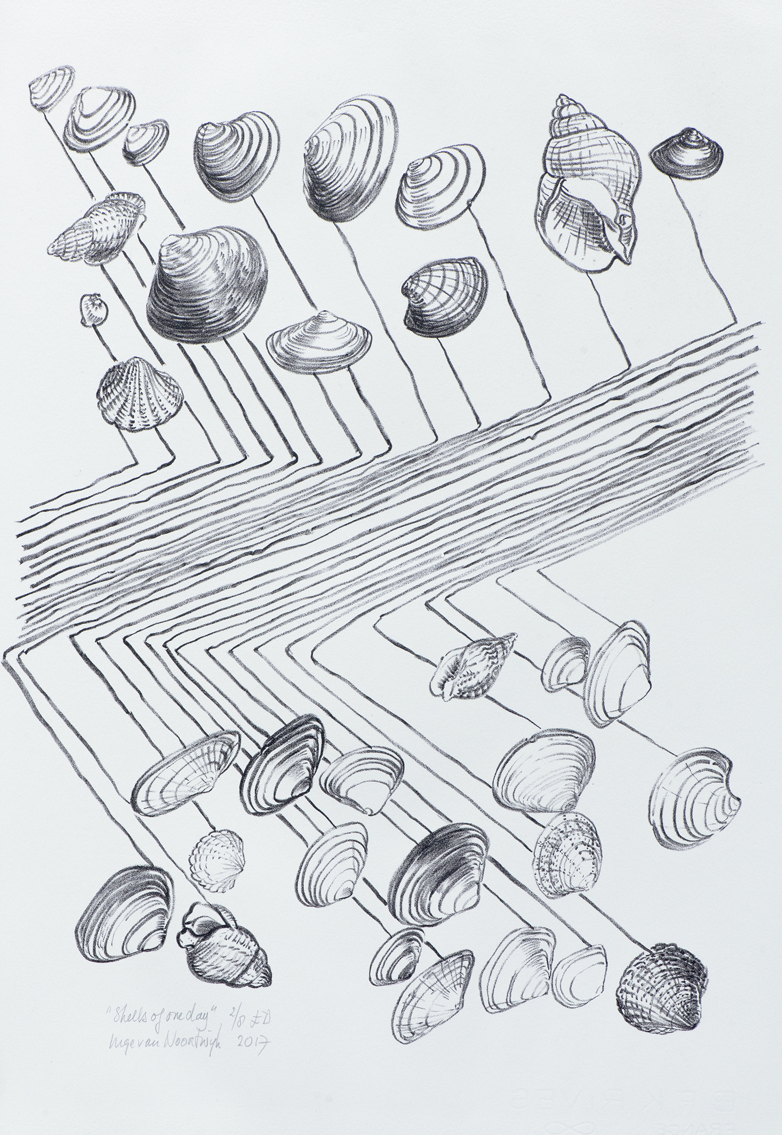 Shells of one day 2017 litho